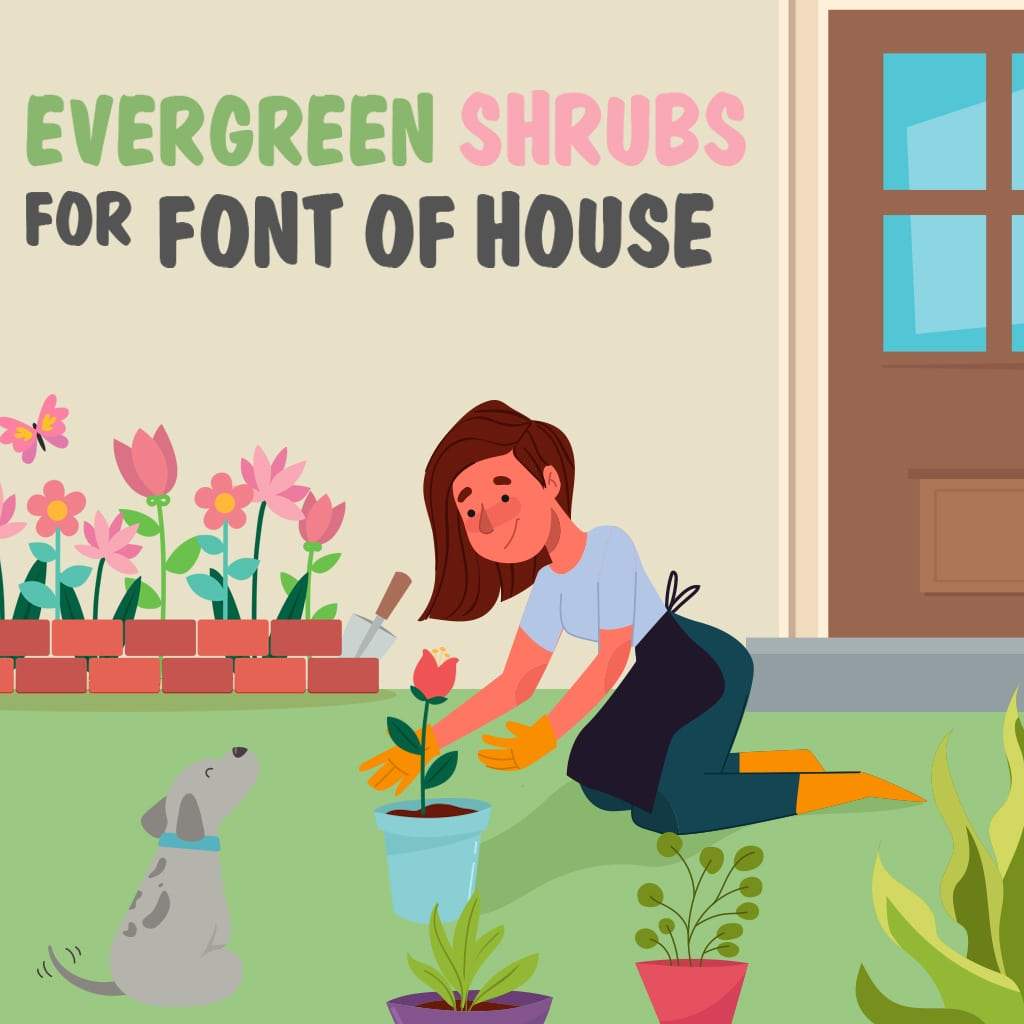 Top 10 Best Evergreen Shrubs For Front Of House 2020 Reviews