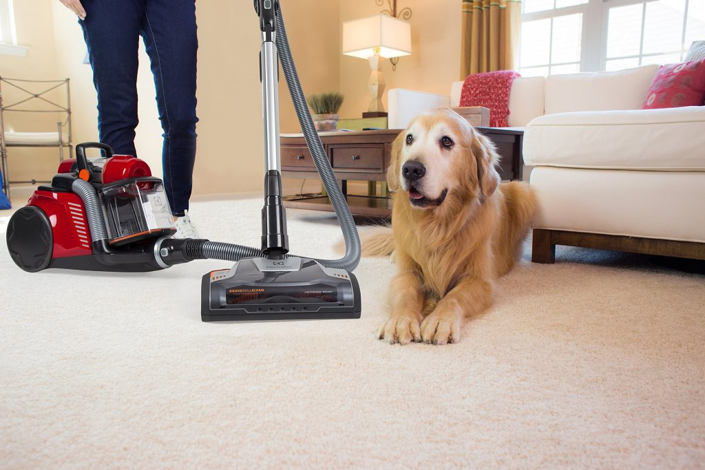 10 Best Vacuums For Pet Hair On Carpet Hardwood Floor
