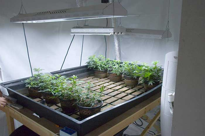 Heater for Grow Room