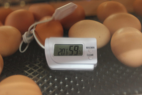 Incubator Thermometer and Hygrometer