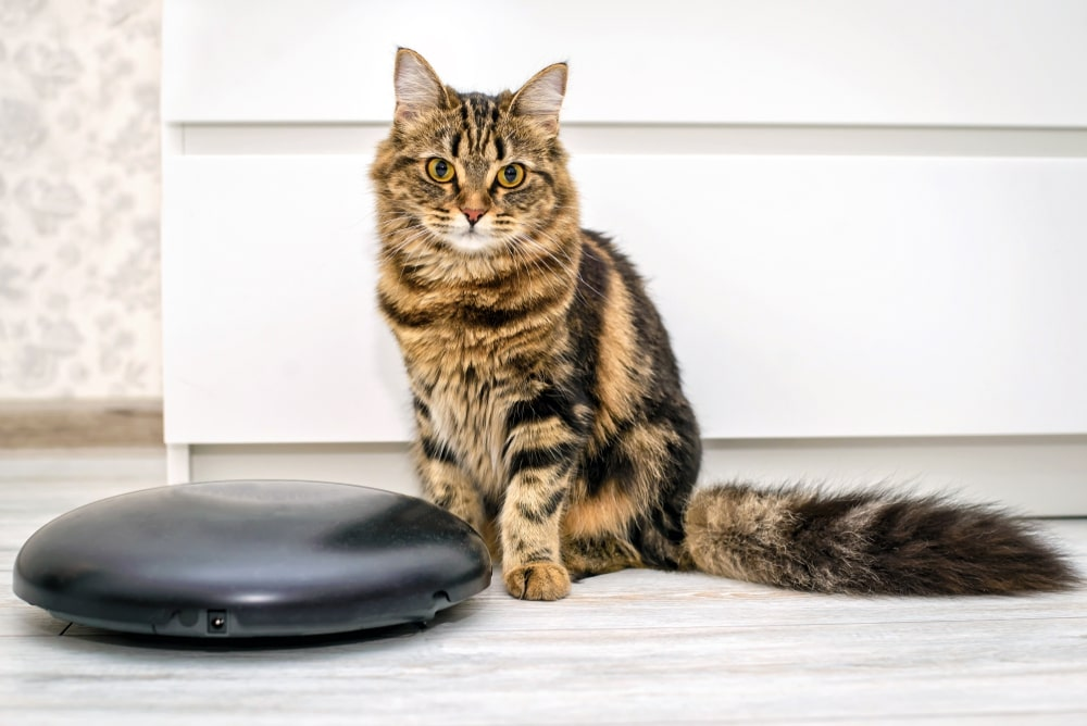 Roomba for Pet Hair and Hardwood Floors