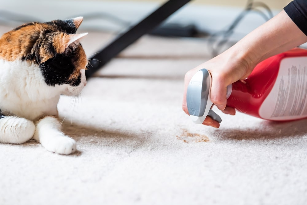 Portable Carpet Cleaner For Pets Stains