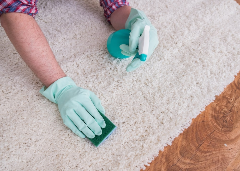 Carpet Cleaner For Old Pet Urine Stains