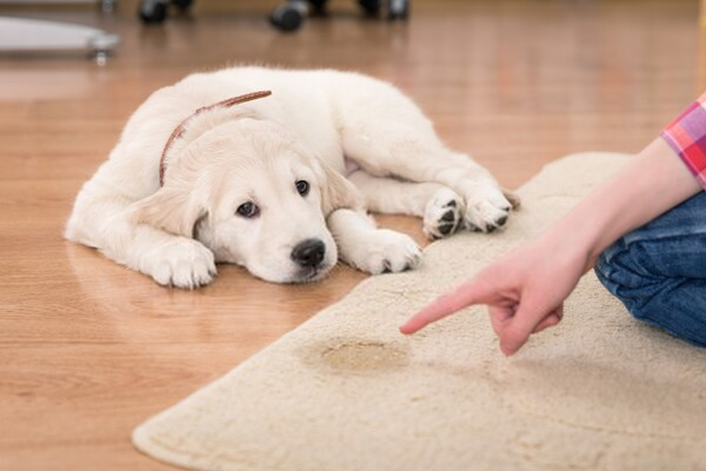 Enzyme Cleaner for Dog Urine