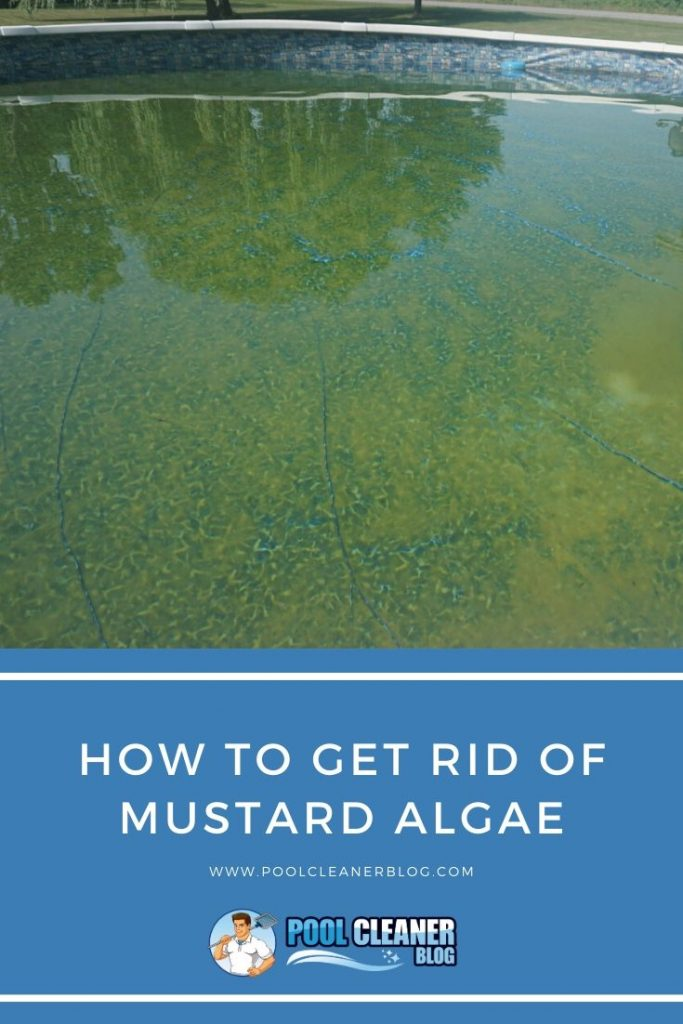 How to Get Rid of Mustard Algae